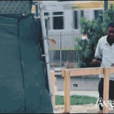 Dinosaur-prank-pushed