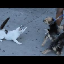 Stray Cat Sits on Sidewalk Pawing Playfully at Pedestrians - 1127917