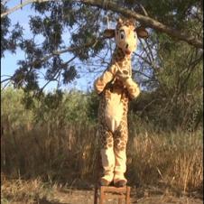 Giraffe-noose-hanging-fail