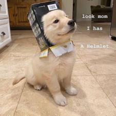 엄마 저 멋진 헬멧을 얻었어요