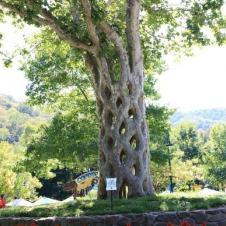 신기한 나무