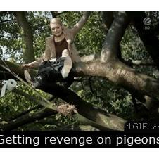 Pigeon-revenge-bird-nest