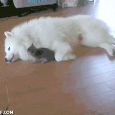 귀찮은 강아지와 발랄한 고양이