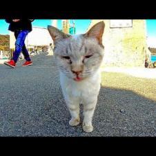 猫島の野良猫の散歩に付いていってみた