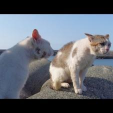 目を合わさずに怒鳴り合う猫の喧嘩が何故か楽しい