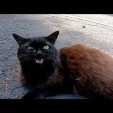 野良猫「この道を通りたければモフってからにしてもらうニャン」