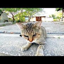 夕方の神社で猫の集会に参加してきた