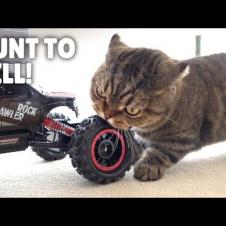 Fearless LuLu Even Hunted a Car! | Kittisaurus