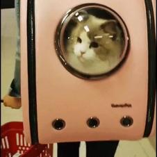 외출용 고양이 가방
