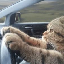 고양이의 질주