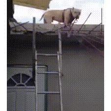 사다리 타는 개