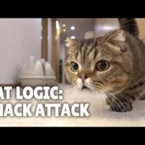 Cat Logic: Snack Attack