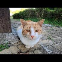 公園で野良猫が1人座っていたのでナデナデしたら喜んで膝の上に乗ってきた
