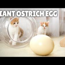I Cooked a Massive Ostrich Egg for My Cats! | Kittisaurus