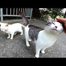 道端で出会った子猫達が可愛過ぎる