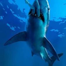 상어가 사람을 삼키는 순간