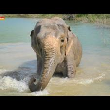 Слон Королевский и Фермерский, угадай кто? Тайган. Elephants life in Taigan.