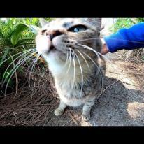 木陰で野良猫が休んでいたので近づいてナデナデしてきた