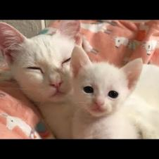 Wake Up Mom