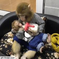 엄마 원숭이