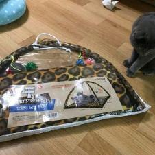고양이 텐트를 샀더니