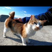 防波堤に座っていたら野良猫がトコトコ歩いてきた