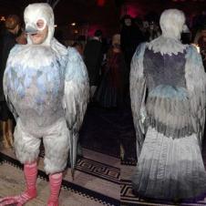 비둘기 코스프레