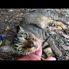 木陰で休んでいた野良猫に近づいてナデナデしたら突然頭突きしてきた