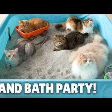 My Cats Enjoyed a Humongous Sand Bath! | Kittisaurus