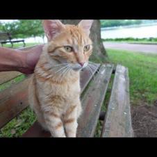公園のベンチに野良猫が寝ていたので隣に座ってナデナデしてきた
