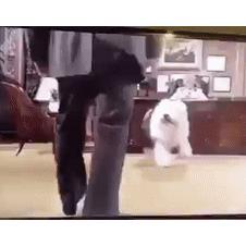 큰 강아지의 위험성