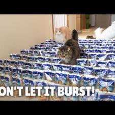 Juice Carpet Challenge! Don't Let It Burst! | Kittisaurus