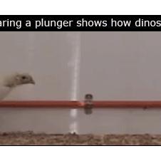 공룡의 후예