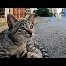 路地裏でキジトラ子猫をナデナデしたら遠くから別の子猫もモフられに歩いてきた