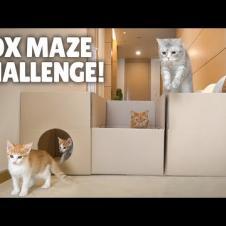 Box Maze Challenge! Think Outside the Box! | Kittisaurus