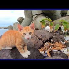 防波堤で寛ぐ野良猫家族に近づいてみたら母猫が出てきて「ウチの子達が何か?」
