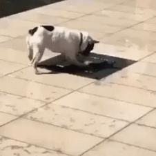 물먹다 날벼락!!