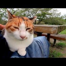 テーブルに付くとスーッと膝の上に乗ってくる野良猫が可愛過ぎる