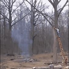 나무 자르기 사고