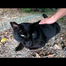 植込みの中で寝ていた黒猫がモフられに出てきた