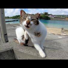 防波堤に座っていた野良猫がこっちを見ていたのでナデナデしてきた