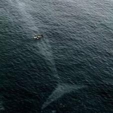 거대한 고래의 모습