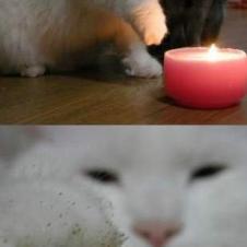호기심 많은 고양이의 발