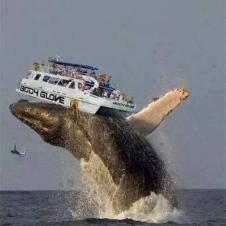 유람선을 통째로 들어올린 고래