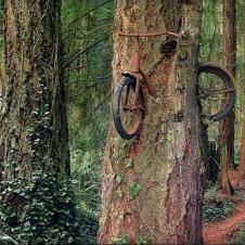 기대 놓았던 자전거가 오래되어 나무와 합쳐 졌네요