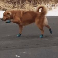 신발 처음 신어 본 dog