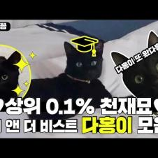 [찜꽁습꽁] 상위 0.1% 천재 고양이 💖다홍이💖 모음! 세상에 다홍이 하버드 가야 할 것 같아요. (진심)ㅣSBS ENTER.