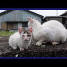 子猫を連れて帰ろうとするけどもう手に負えなくなってきたママ猫