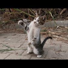 네 마리의 새끼 고양이가 차 밑에서 왔어
