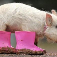 돼지발에 장화